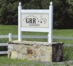 Gata Rein Ranch Reining Horses for Sale
